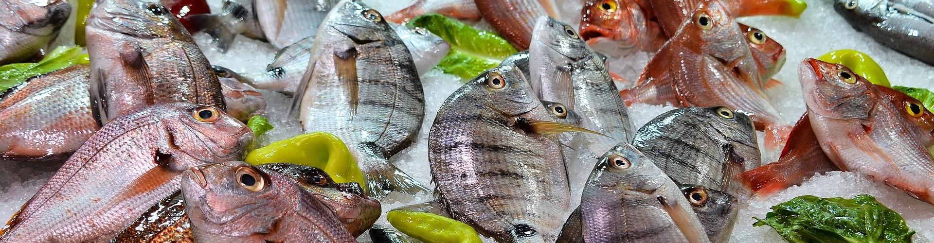 Ryby i Dania z rybami